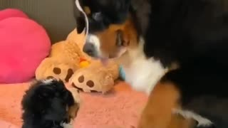 Loving puppy and mother dog