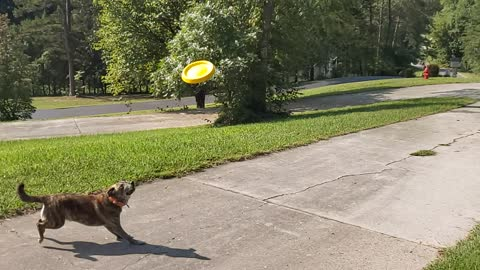 Super SloMo RoRo catching frisbee
