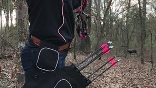 3D Archery tournament