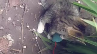 Asmr 😻😻 Kitten and mouse playing part 2
