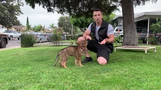 Steps When Training a Service Dog.