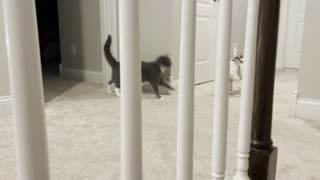 Puppy takes on cat