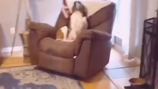 Dog Thinks Eye Contact Makes Her Look Guilty