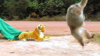Fake Tiger Prank with Monkey