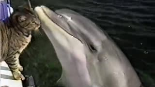 Super Cute Dolphin And Cat Playing!