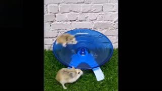 Super adorable pets