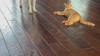 Puppy and kitten have been best friends since birth dog