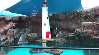 Sea lion grabbing a snack of fish