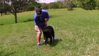 Get your dog to BARK on command