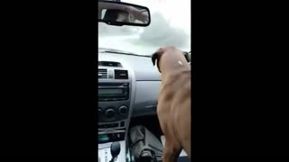 Funny Dog Amused with Wipers | Must Watch !!!