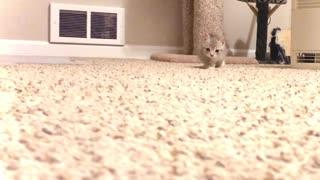 Seriously Cute Kitten Stalks Camera