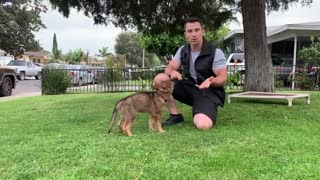 10 Steps When Training (imprinting) a Service Dog