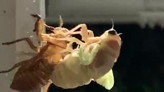 A wonderful night when cicada emerges