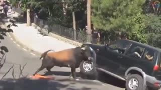 Funniest animal attacks