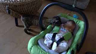 Cats Meeting for the FIRST TIME! Compilation