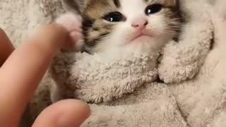 Funny Baby cat - Super cute baby kitten
