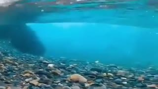 Lake water purity
