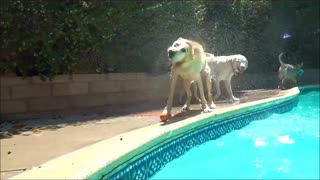 Best Diving Dogs