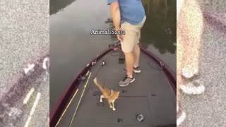 A hero rescues a drowning kitten