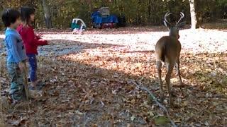 Super Friendly Wild Deer Lets Kids Pat It
