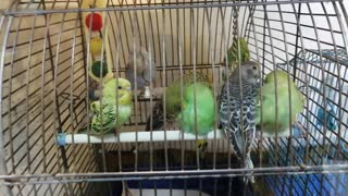 Very cute parrots in a cage.