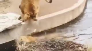 Hilarious animal fail