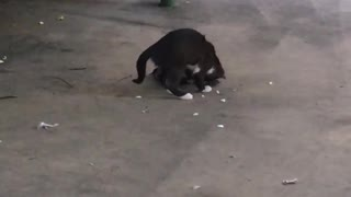 funny heavy metal cat