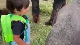 Criança brincando com animais carinhoso