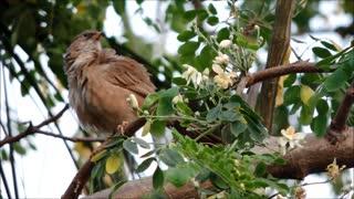 Strange Birds Records On Tree Branch