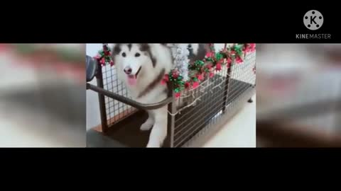 Watch funny dogs laughing