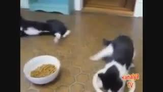 Animales borrachos muy gracioso