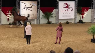 Arabian breeders world cup at South Point in Las vegas on April 14, 2018.