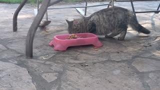 Mmmmm yummy food....ESCAPE!!!!!!