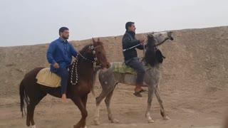 Fastest Arabian Horse