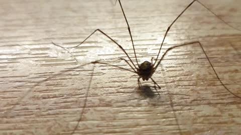 Monster spider