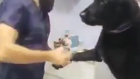Today the dog went to get an injection from the doctor
