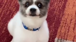 Tell Your Dog You Pet Another Dog! Funny Video!