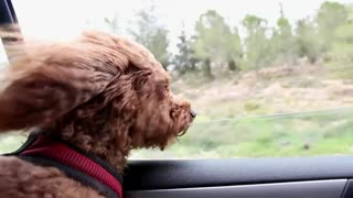 How to Travel with a Dog in the Car