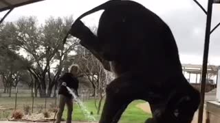 elephant exercising and dancing when bathing