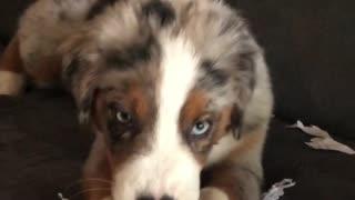 Naughty puppy eats up geometry homework