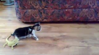 Curious cute cat