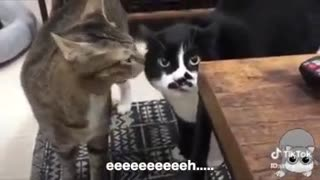 Cats speaking English