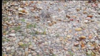 Raindrops Hitting Gravel