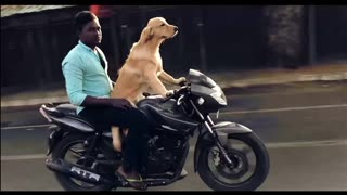 Rescue dog riding a bike