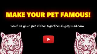 Cats and dogs singing with their owners!