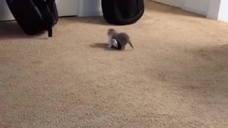 Cats fighting lol
