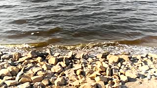 Windy Beautiful Day At Qarun Lake Water