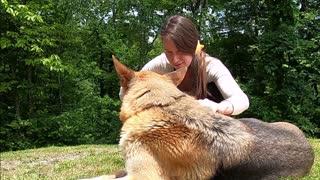 german shepherd -brushing-her-