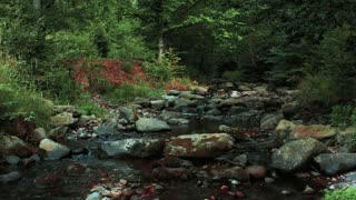 Nature: flowing river on rocks in a forest