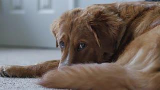 Slider shot dog